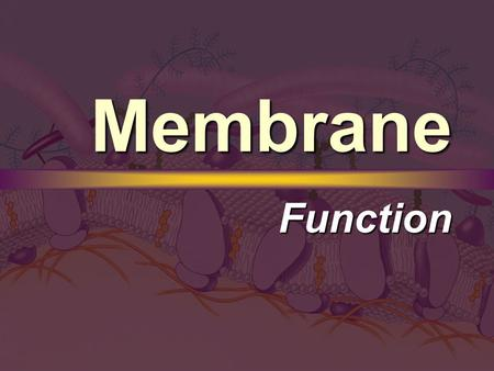 Membrane Function. Passive Transport Concentration Gradient Concentration Gradient  A difference in concentrations across the plasma membrane.