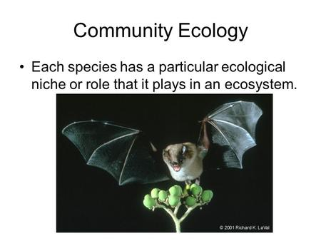 Community Ecology Each species has a particular ecological niche or role that it plays in an ecosystem.