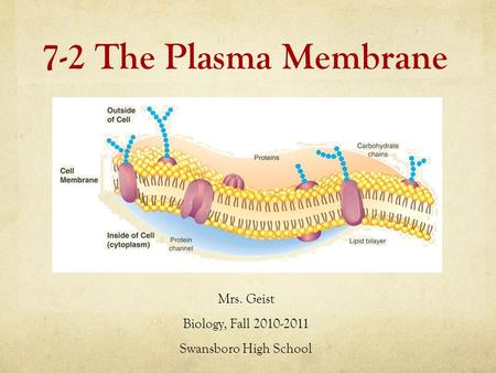 7-2 The Plasma Membrane Mrs. Geist Biology, Fall 2010-2011 Swansboro High School.