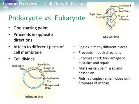 Lesson Overview Lesson Overview Cell Growth, Division, and Reproduction Prokaryote vs. Eukaryote One starting point Proceeds in opposite directions Attach.