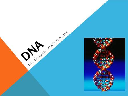 DNA THE CELLULAR BASIS FOR LIFE. DNA STRUCTURE DNA is a nucleic acid made up of nucleotides joined into two long strands by covalent bonds Nucleotides.