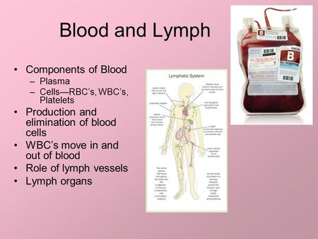 Blood and Lymph Components of Blood –Plasma –Cells—RBC's, WBC's, Platelets Production and elimination of blood cells WBC's move in and out of blood Role.