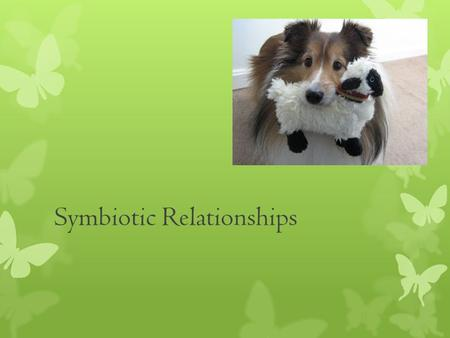Symbiotic Relationships Symbiosis- Any relationship in which two species live closely together. 3 Types of symbiosis: 1. Mutualism 2. Commensalism 3.