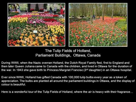 The Tulip Fields of Holland, Parliament Buildings, Ottawa, Canada During WWII, when the Nazis overran Holland, the Dutch Royal Family fled, first to England.