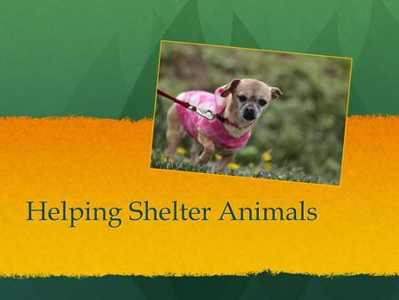 Helping Shelter Animals. How I Started Idea from Seth Casteel (charity called One Picture Saves a Life) Idea from Seth Casteel (charity called One Picture.