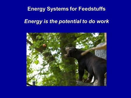 Energy Systems for Feedstuffs Energy is the potential to do work.