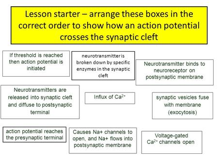 Lesson starter – arrange these boxes in the correct order to show how an action potential crosses the synaptic cleft If threshold is reached then action.