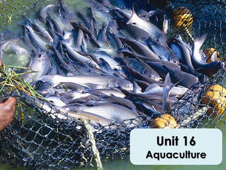 Unit 16 Aquaculture. Growing Industry One of the oldest industries in the world Food fish = largest market Oklahoma – Sport fishing – Fishery.