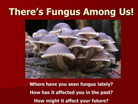 There's Fungus Among Us! Where have you seen fungus lately? How has it affected you in the past? How might it affect your future?
