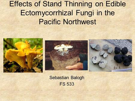 Effects of Stand Thinning on Edible Ectomycorrhizal Fungi in the Pacific Northwest Sebastian Balogh FS 533.