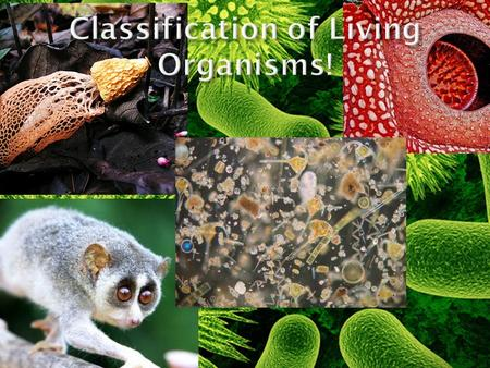  Classification: is the arrangement of things into groups of similar items.  A Dichotomous Key: is a tool used to identify organisms based on contrasting.