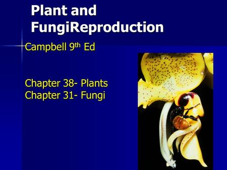 Plant and FungiReproduction Campbell 9 th Ed Chapter 38- Plants Chapter 31- Fungi.