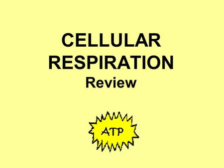 CELLULAR RESPIRATION Review. In which of these organisms would you expect to find cellular respiration happening? All of them; all living things need.