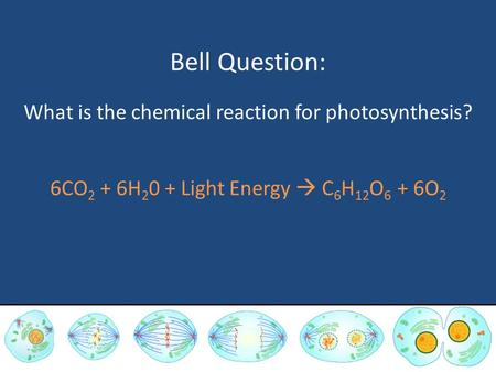 Bell Question: What is the chemical reaction for photosynthesis? 6CO 2 + 6H 2 0 + Light Energy  C 6 H 12 O 6 + 6O 2.