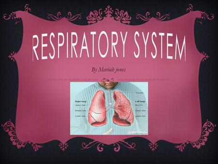 By Mariah jones. ORGANS IN THE SYSTEM  Organs in the respiratory system are the lungs, mouth, nose, trachea, and diaphragm. The respiratory system is.