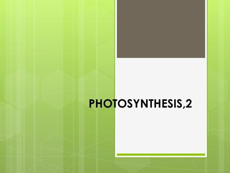 PHOTOSYNTHESIS,2. AIM: How are green plants adapted for photosynthesis?  Do now: If you were designing an efficient leaf for photosynthesis, describe.