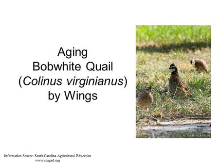 Aging Bobwhite Quail (Colinus virginianus) by Wings Information Source: South Carolina Agricultural Education www.scaged.org.