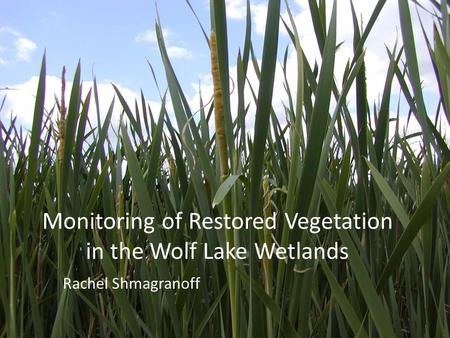 Monitoring of Restored Vegetation in the Wolf Lake Wetlands Rachel Shmagranoff.