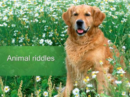 Animal riddles. What animals are they? (your answers write to brackets) Which animal has got eyes on tail ? () It has got six legs and it goes after head.