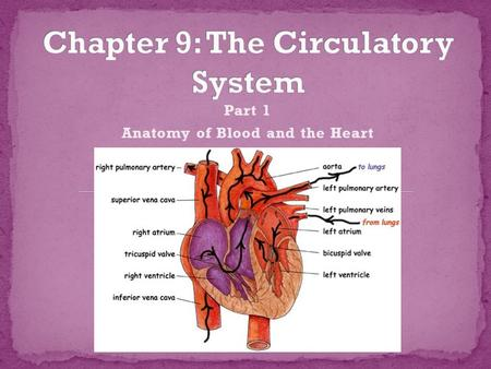Part 1 Anatomy of Blood and the Heart. What's in your blood? Functions of Blood Cells Anatomy of the Heart.