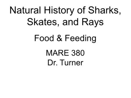 Natural History of Sharks, Skates, and Rays Food & Feeding MARE 380 Dr. Turner.