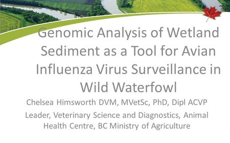 Genomic Analysis of Wetland Sediment as a Tool for Avian Influenza Virus Surveillance in Wild Waterfowl Chelsea Himsworth DVM, MVetSc, PhD, Dipl ACVP Leader,
