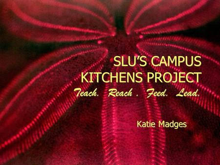 SLU'S CAMPUS KITCHENS PROJECT Teach. Reach. Feed. Lead. Katie Madges.