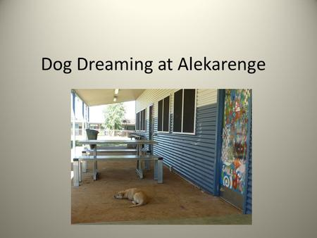 Dog Dreaming at Alekarenge Dog. We are the dogs of Alekarenge. This is Dog Dreaming Country. Our families have been here forever.
