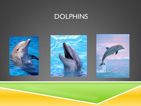 DOLPHINS. ABOUT DOLPHINS  members of the family Delphinidae.  They are carnivores, consuming mostly small fish, squid and shrimp as there food.  Can.
