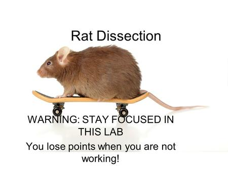 Rat Dissection WARNING: STAY FOCUSED IN THIS LAB