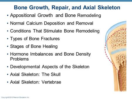 Copyright © 2010 Pearson Education, Inc. Appositional Growth and Bone Remodeling Normal Calcium Deposition and Removal Conditions That Stimulate Bone Remodeling.