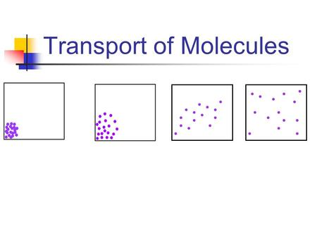 Transport of Molecules. concentration Where is there a higher concentration of yellow dots? AB.