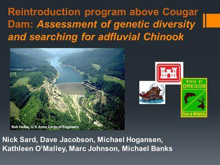 Reintroduction program above Cougar Dam: Assessment of genetic diversity and searching for adfluvial Chinook Nick Sard, Dave Jacobson, Michael Hogansen,