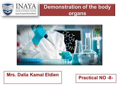 Demonstration of the body organs Mrs. Dalia Kamal Eldien Practical NO -8-