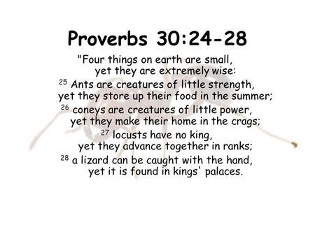 Proverbs 30:24-28 Four things on earth are small,        yet they are extremely wise:  25 Ants are creatures of little strength,        yet they store.