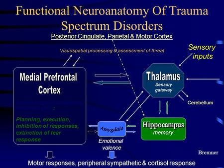 Functional Neuroanatomy Of Trauma Spectrum Disorders Sensory inputs memory Anterior Cingulate, orbitofrontal, subcallosal gyrus; Planning, execution, inhibition.