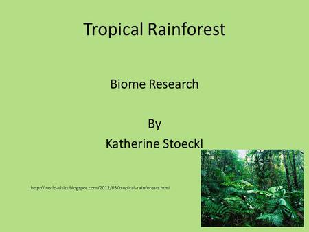 Tropical Rainforest Biome Research By Katherine Stoeckl
