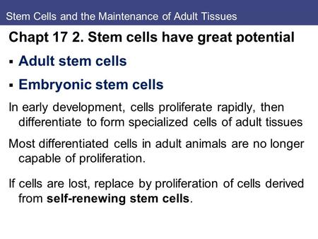 Stem Cells and the Maintenance of Adult Tissues