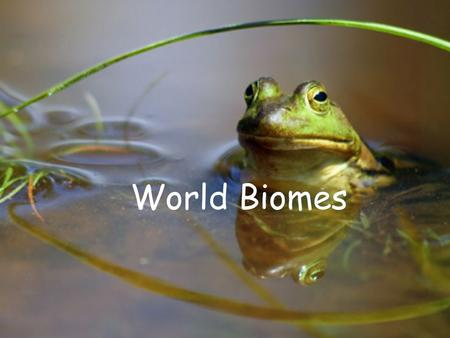 World Biomes. Why are ecosystems and Biomes so different? The climate The climate is the main driving force in an ecosystem. It affects.. 3. The animals.
