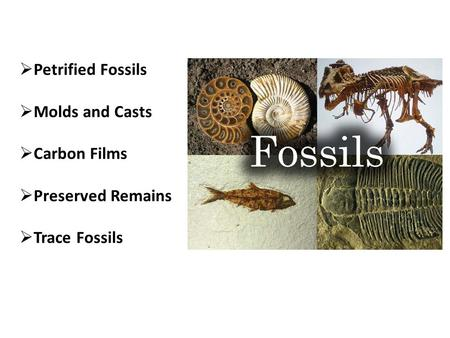  Petrified Fossils  Molds and Casts  Carbon Films  Preserved Remains  Trace Fossils.