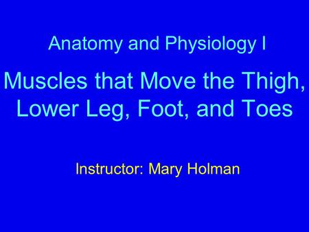 Anatomy and Physiology I Muscles that Move the Thigh, Lower Leg, Foot, and Toes Instructor: Mary Holman.