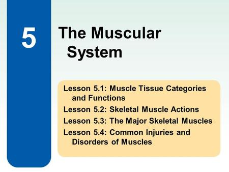 The Muscular System 5 Lesson 5.1: Muscle Tissue Categories and Functions Lesson 5.2: Skeletal Muscle Actions Lesson 5.3: The Major Skeletal Muscles Lesson.