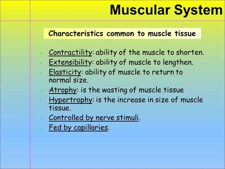 Muscular System ▪ Contractility: ability of the muscle to shorten. ▪ Extensibility: ability of muscle to lengthen. ▪ Elasticity: ability of muscle to return.