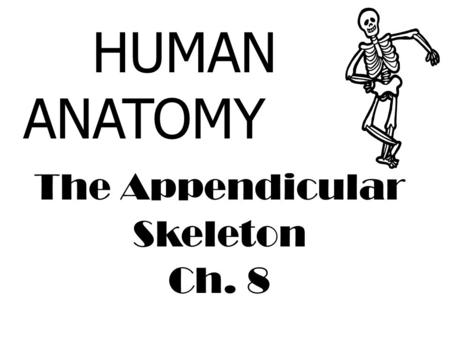 The Appendicular Skeleton Ch. 8 HUMAN ANATOMY. Appendicular Skeletal System 126 bones Consists of the: Upper Extremities Pectoral Girdle Humerus Ulna.