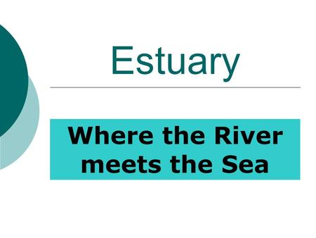 Estuary Where the River meets the Sea. Importance:  Nursery Ground  Filters Pollutants  Absorbs excess Rainfall (run- off)  Nutrient Trap  Sediment.