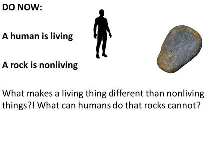 DO NOW: A human is living A rock is nonliving What makes a living thing different than nonliving things?! What can humans do that rocks cannot?