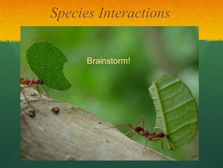 Species Interactions Brainstorm!. Species Interactions Species Interactions Fitness: the ability of an organism to survive, reproduce, and pass along.