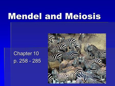 Mendel and Meiosis Chapter 10 p. 258 - 285. Chapter Outline  Mendel's Laws of Heredity  Meiosis.