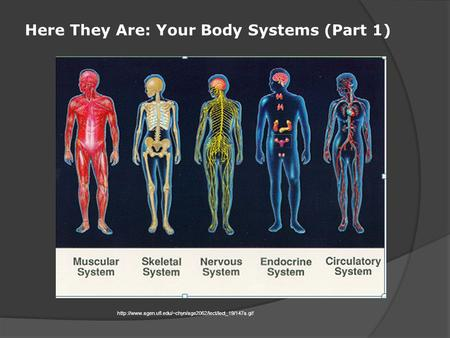 Here They Are: Your Body Systems (Part 1)