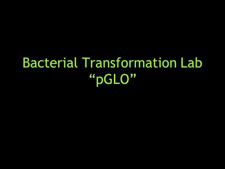 "Bacterial Transformation Lab ""pGLO"". pGLO A fluorescent protein from the jellyfish, Aequorea victoria The pGLO plasmid contains several genes that are."